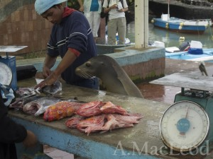 And they outright refuse to form an orderly line at the fish market.
